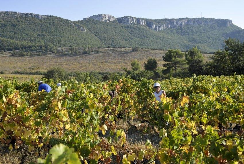 LV - Landscape - vineyard 1