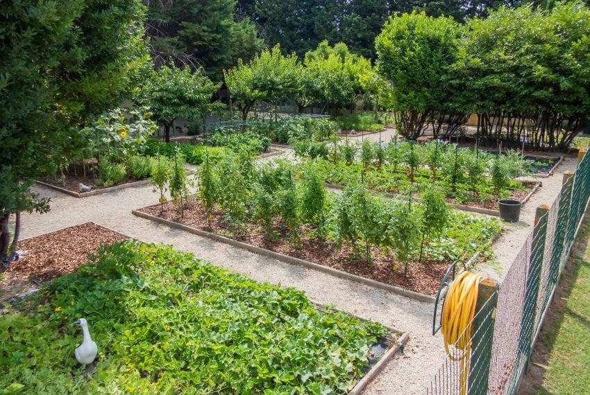 Vegetable garden-min
